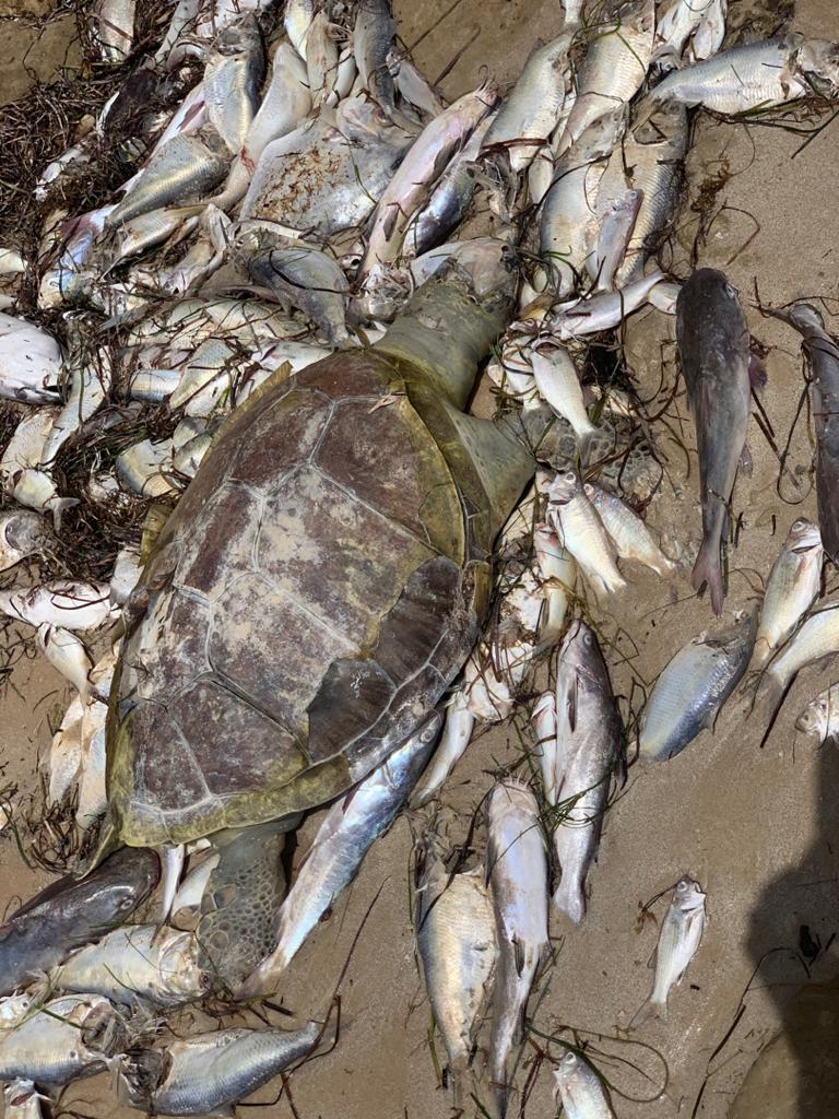 نفوق كميات من الأسماك بحوض آرگين يدق ناقوس الخطر على ثرونتا السمكية